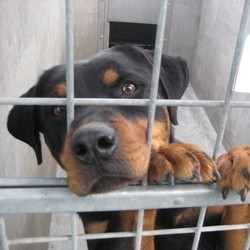 chiens de laboratoire recherche vente illégale