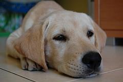 chien bo obama sarkozy
