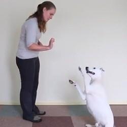 un chien apprend le langage des signes