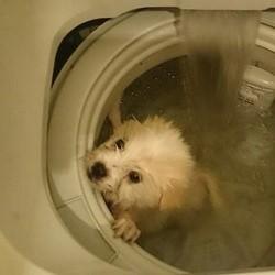 un chien dans un lave-linge