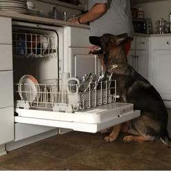 chien range le lave vaiselle