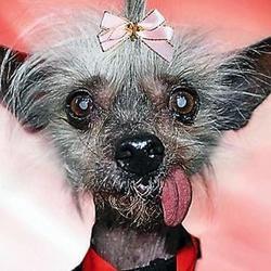 chien le plus moche du monde mort