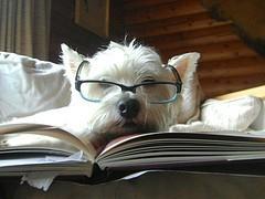 chien lit un livre