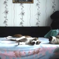 un chien joue sur le lit de ses maîtres