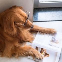 livre sur les chiens et les chats