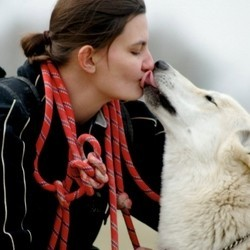 chien domestication loup