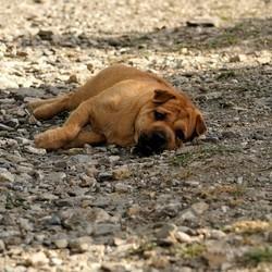 aider son animal de compagnie à lutter contre la chaleur de l'été