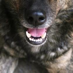 chien mal aux dents tartre