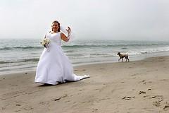 chien marié