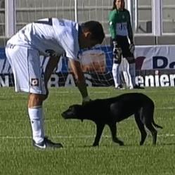 Un chien errant interrompt un match de foot