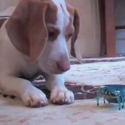 un chien joue avec un robot crabe