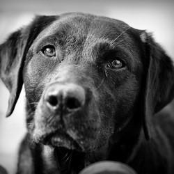 un chien renifleur reçoit la médaille du courage