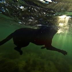 Chien sauvé de la noyade dans la baie de San Francisco