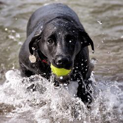 chien baignade
