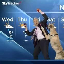 un chien présente la météo