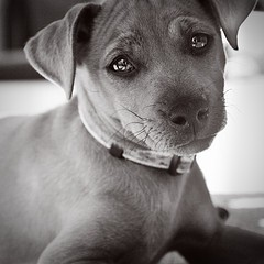 concours chien mignon