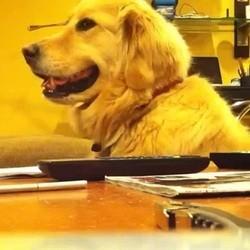 video de chien musique guitare