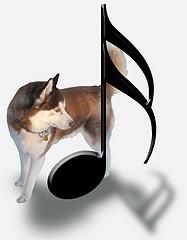 chien star musique