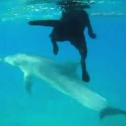 un chien nage avec les dauphins
