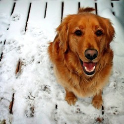 chien neige