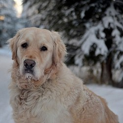 chien froid neige hiver