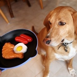 chien nourriture alimentation