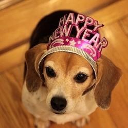 chien nouvelle année