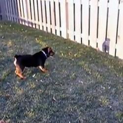 chien ombre jardin cloture