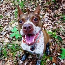 chien optimiste et pessismiste étude