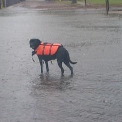 chien ouragan sandy tempête inondation
