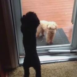 un chiot ouvre la porte à un autre chien