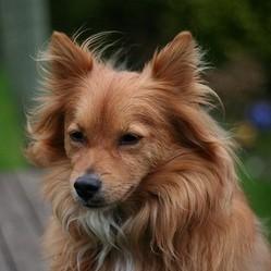 chien pelage, poils