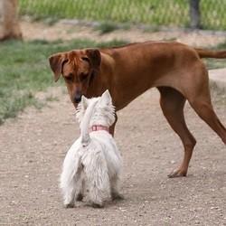chien florange piège lame rasoir