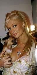 paris hilton chien star