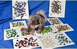 chien peintre Ziggy