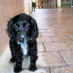 chien disparu detective