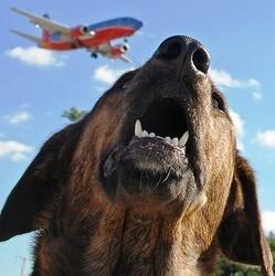 chien perdu transit