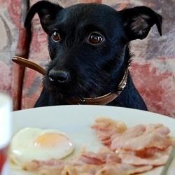 chien petit déjeuner