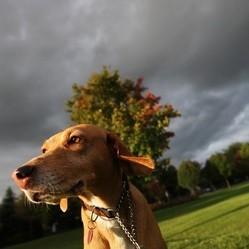 Comment calmer un chien qui a peur de l'orage ? - Eduquer