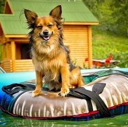 chien été vacances