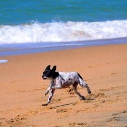 chien été plage accessoires jeux
