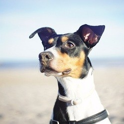 chien plage vacances