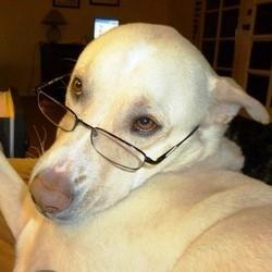 chien plus gros cerveau que le chat étude