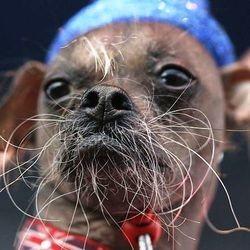 chien plus moche du monde