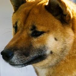 plus vieux chien du monde
