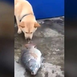 un chien tente de sauver des poissons