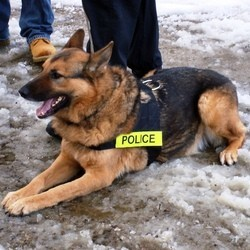 chien policier k9 mordu par homme