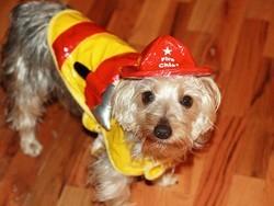 chien héros pompier