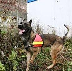 chien pompier retrouve octogénaire disparu