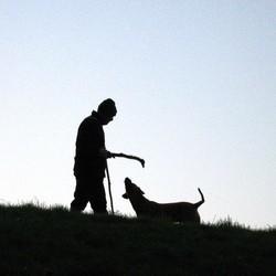 chien prefere homme